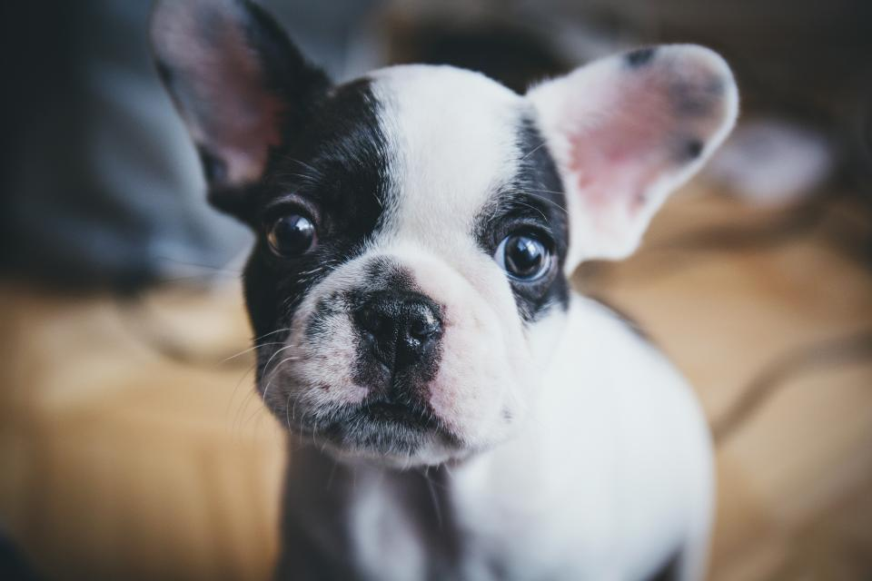 expert tips for pet photography